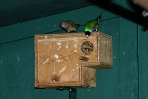 Gouldian Finch Nest Box