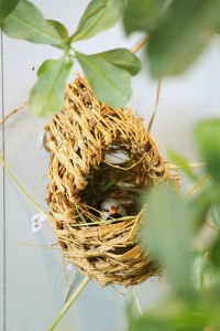 Shaft-Tail Finch Nest