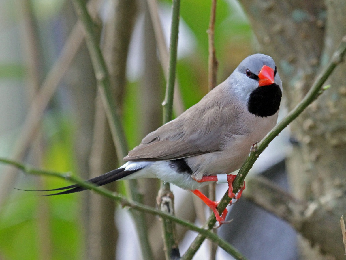 relationship between galapagos finches and south american