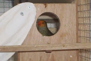 Star Finch Nest Box