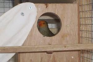 Star Finch Nest Box
