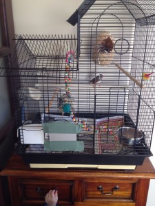 Zebra Finch Cage