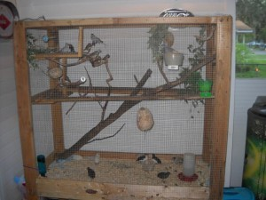 Outdoor Cat Enclosure Diy Easy