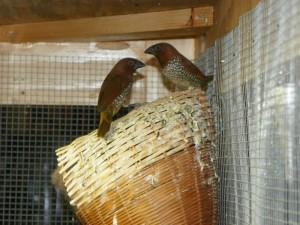 Spice Finch Housing