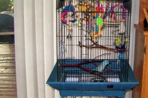 Pacific Parrotlet Cage Setup
