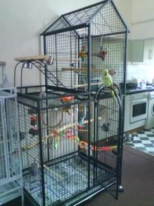 Ringneck Parakeet Housing