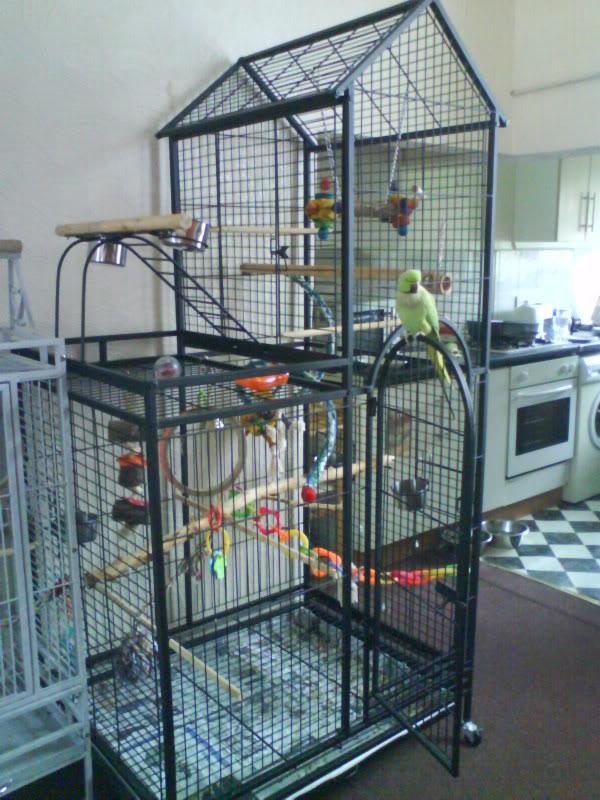 Parrot Cat In Box