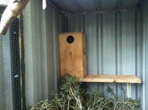 Ringneck Parakeet Nest Box