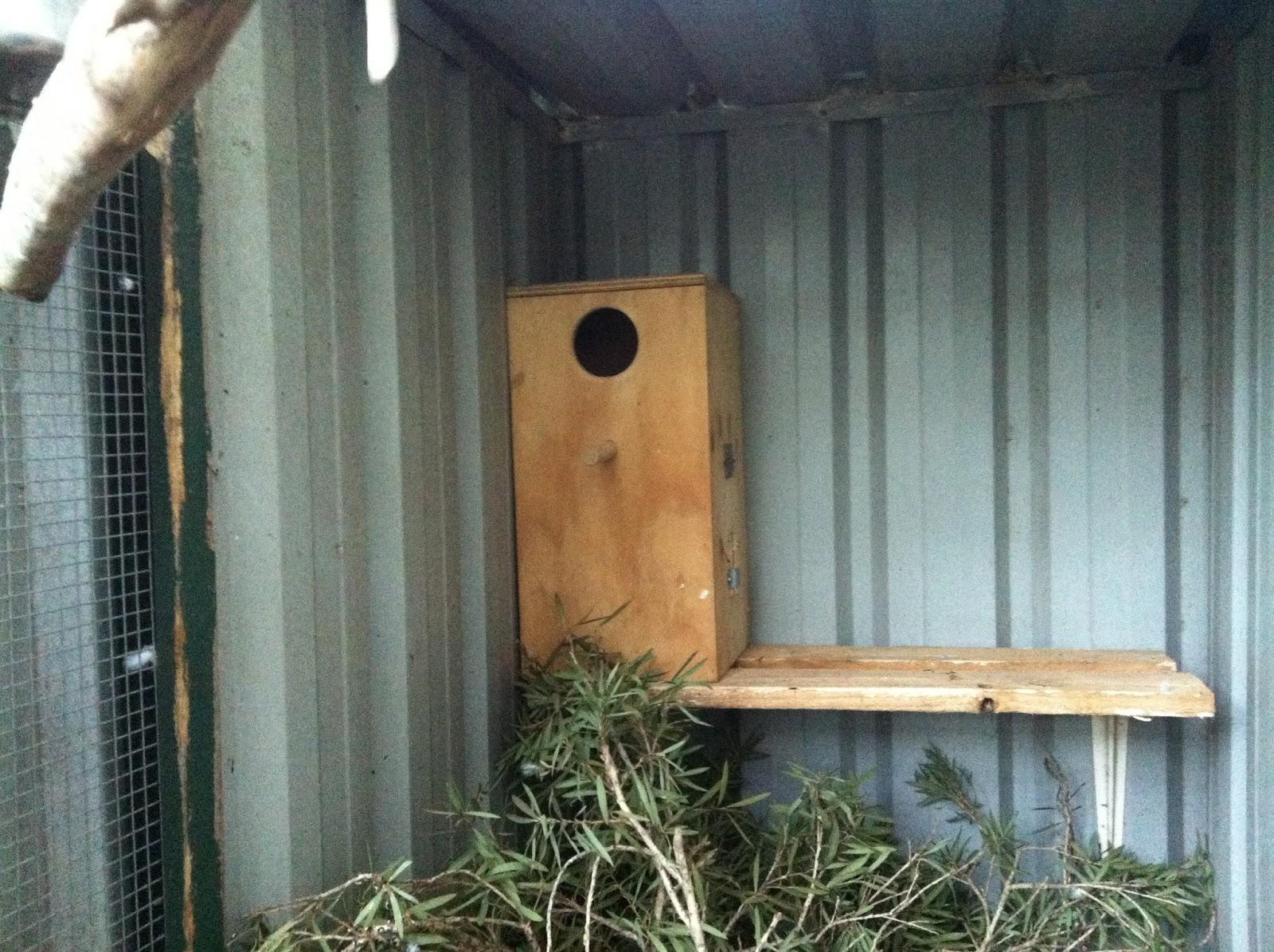 how to make cockatiel breeding box