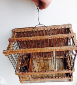 European Linnet Cage Setup