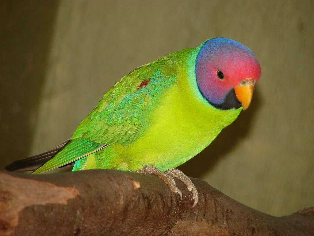 Bubble Letter Alphabet Coloring Pages On Different Color Parakeets