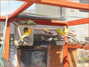 Red Rump Parakeet Nest Box