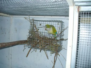 Quaker Parrot Nest Box