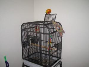 Sun Conure Cage