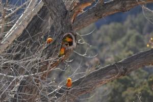 Sun Conure Nest