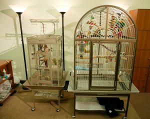 Senegal Parrot Cage
