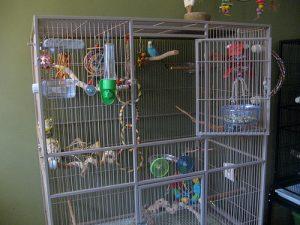 Budgerigar Cage