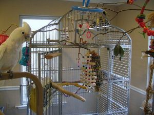 Goffin Cockatoo Cage