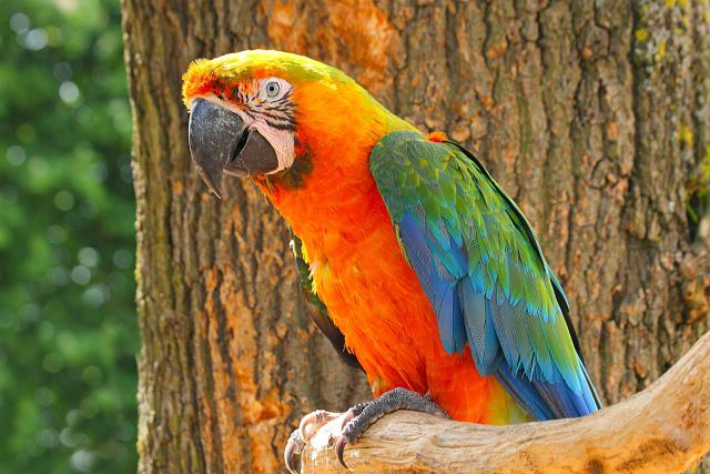Catalina Macaw Facts, Care as Pets, Behavior, Health ...