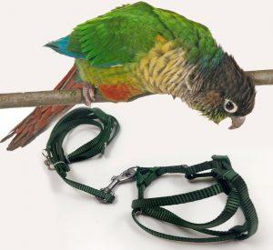 Crown Adjustable Parrot Bird Harness Leash