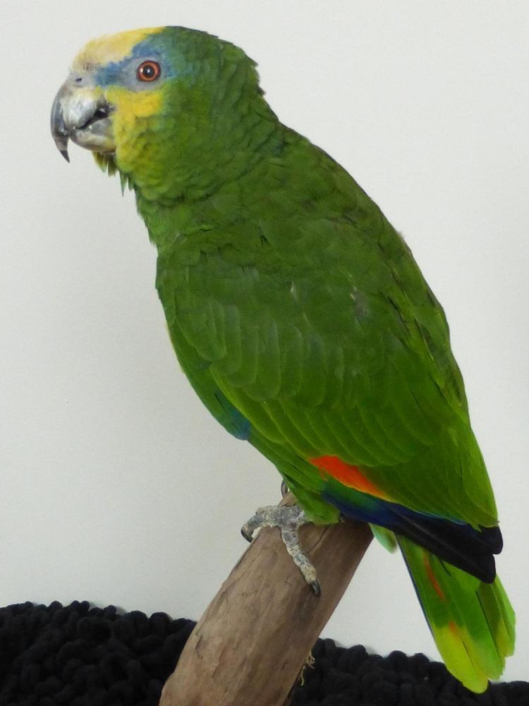 смутил тот фото венесуэльского попугая бульдозеры сгребают